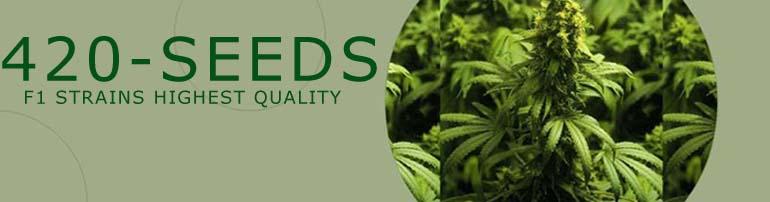 marijuana_seeds