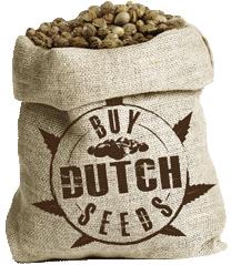 buydutchseeds_logo-seeds