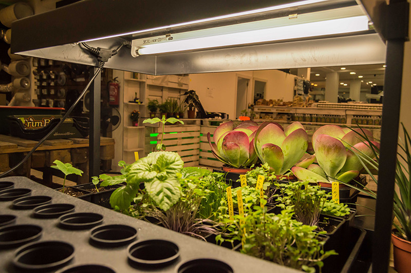 plantas-creciendo