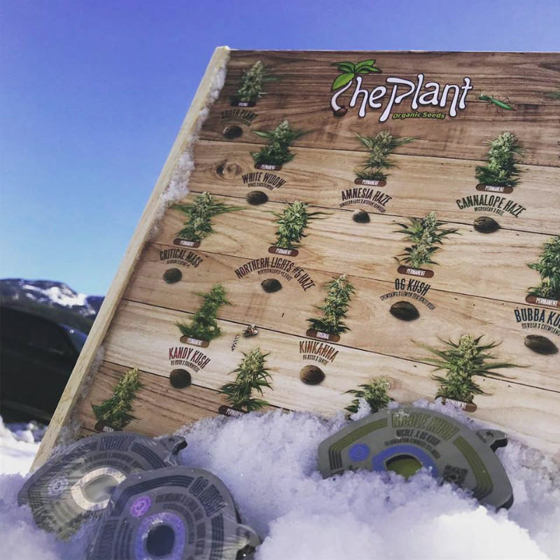 Invierno-The-Plant