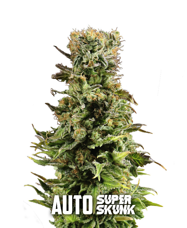 AUTO-superskunk-final