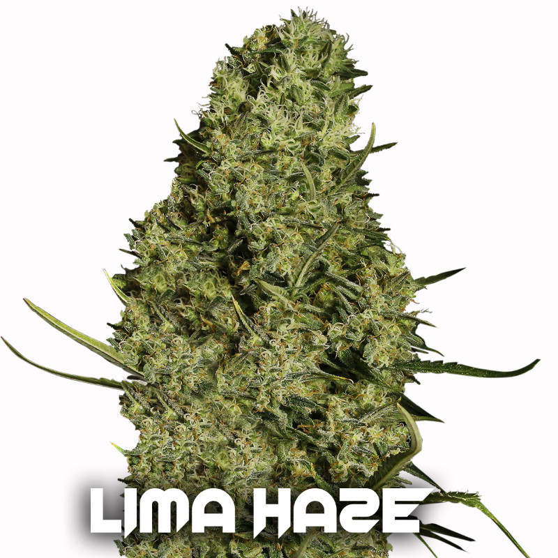 LIMA-HAZEbuena
