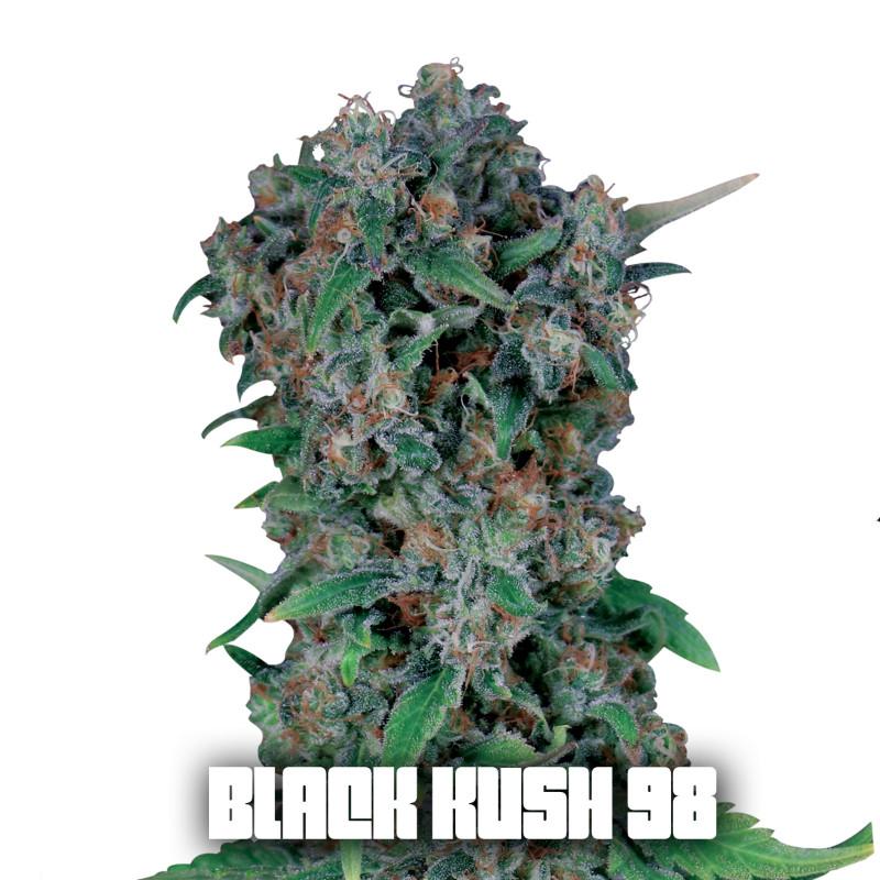 blackkush