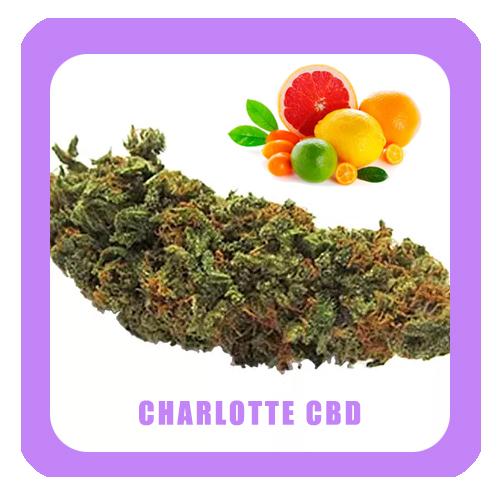 Charlotte-CBD2-copia-copia