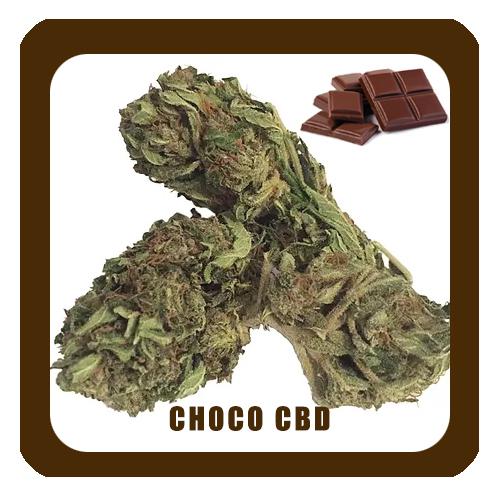 Choco-CBD-NOM5