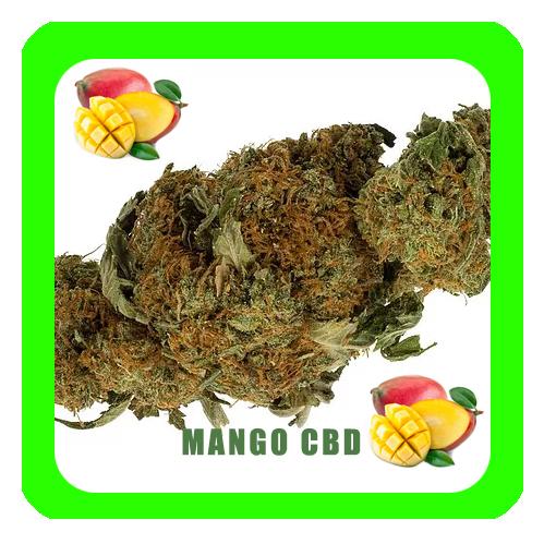 Mango-CBD6-copia