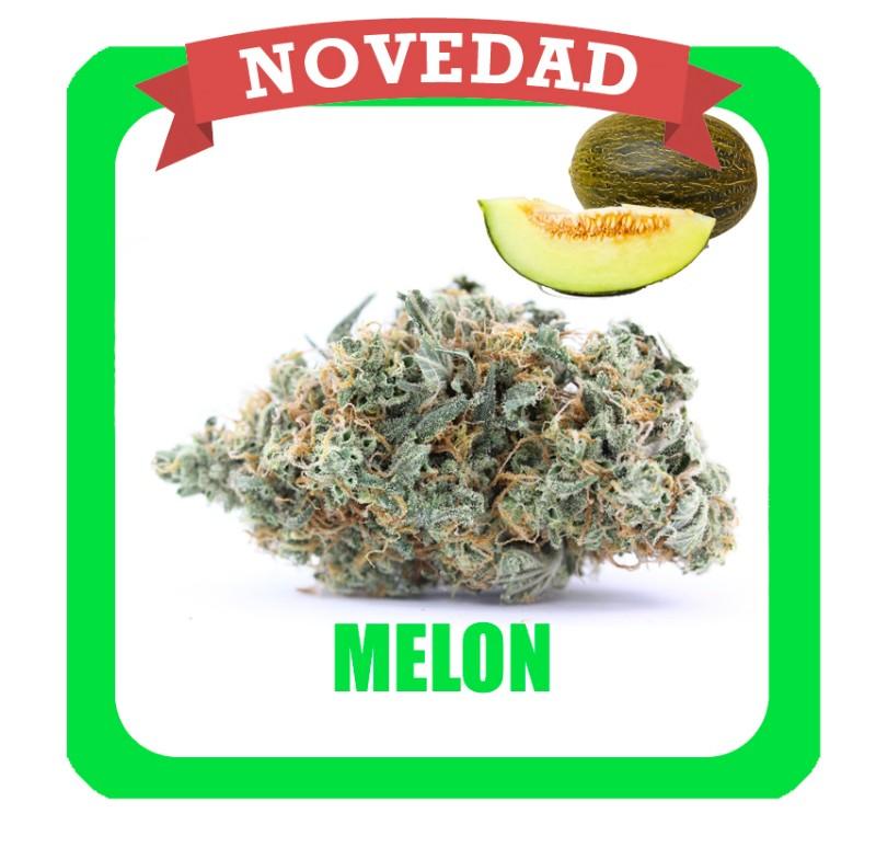 melon-novedad-1