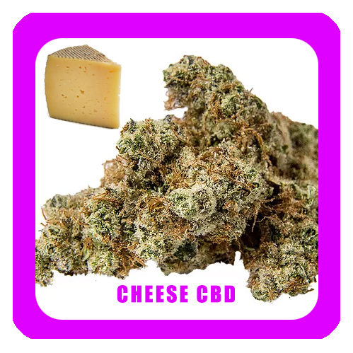 Cheese-CBD-1