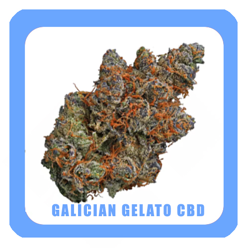 Galician-gelato-CBD